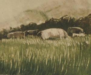 Cattle In A Rushy Field